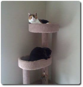 Cats in a cat tree