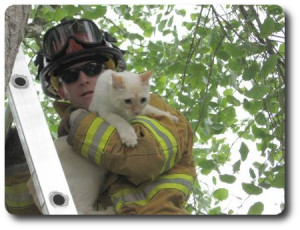 Cat in tree with fire fighter