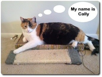 My-name-is-Cally