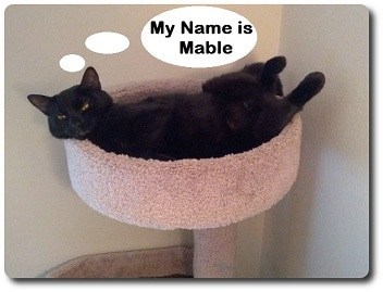 My-name-is-Mable
