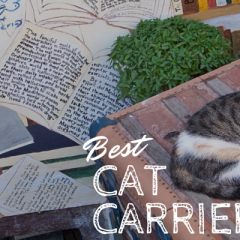 Best Cat Carrier: Traveling with your Kitty!