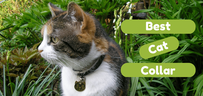 5 Best Cat Collars And Harnesses