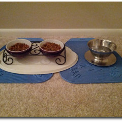 Finding The Right Cat Food Bowl And Water Dish!