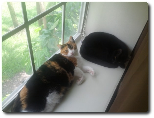 cat keeps urinating