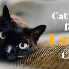 Top 5 Cat Beds For Large Cats