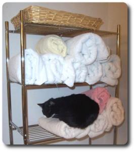 Cat Shampoo 2