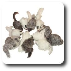 Fur Mice