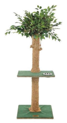 Cat Tree Ficus Leaves