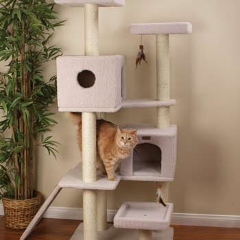 Petco Premium Tree Highrise Review