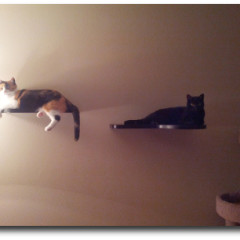 Using Cat Wall Shelves In Your Home